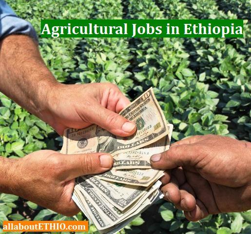 agricultural jobs in ethiopia