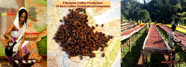 coffee production in ethiopia