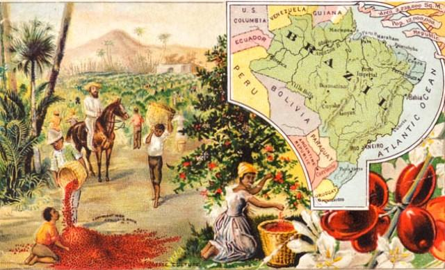 ethiopian coffee history first coffee plantations brazil