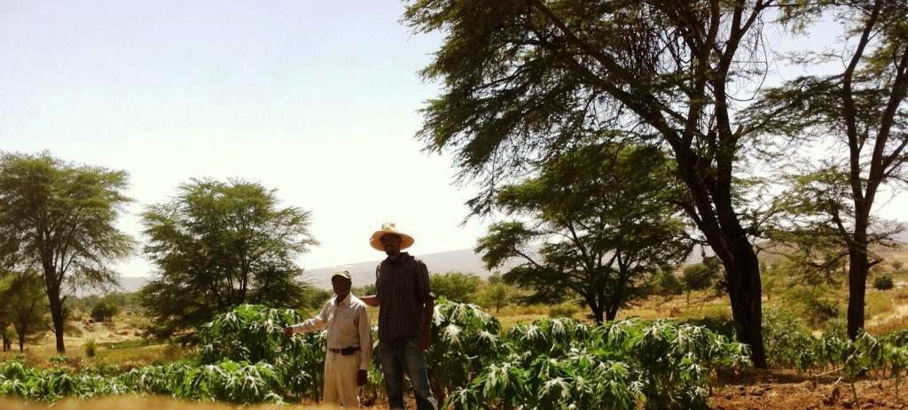 agriculture in ethiopia, babile, agriculture investors in Ethiopia, harar farmers, fruit vegetable farmers ethiopia