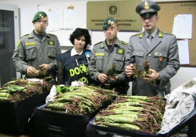 khat-seized-in-italy